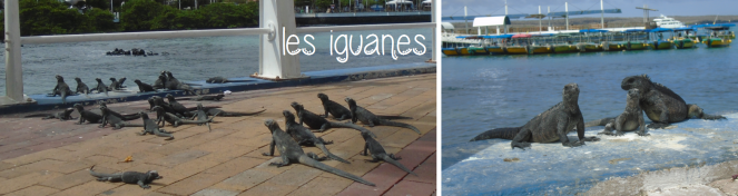 port-iguanes